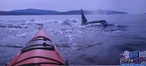 サンファン島でカヤック体験